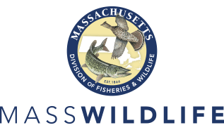 home-page-logos-mass-fish-transparency